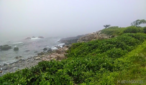 11. ocean fog on ocean ave kennebunkport 7-3-14