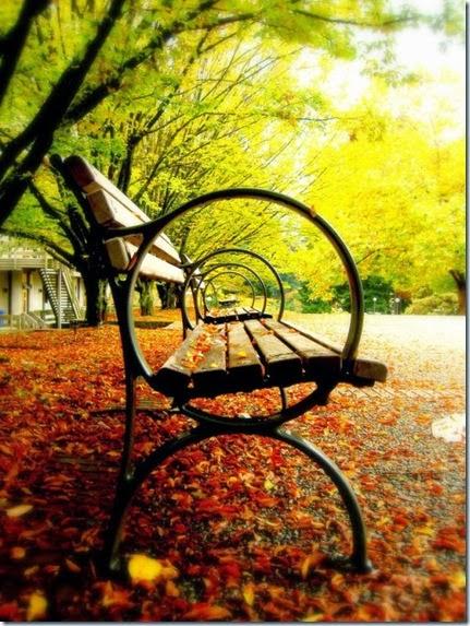autumn-colors-fall-004