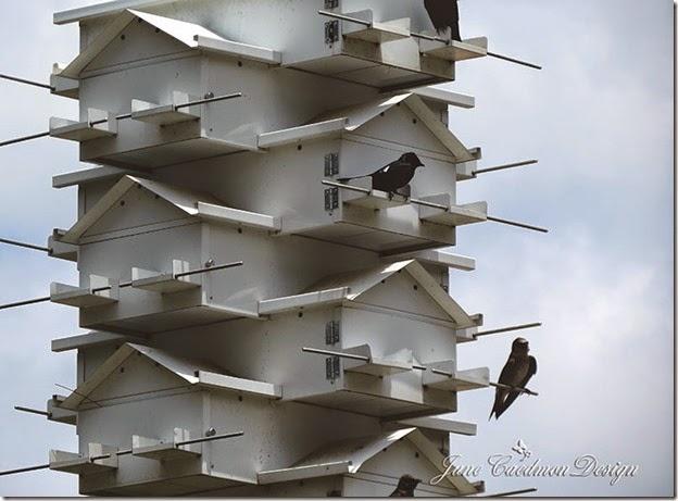 BirdhouseCommunity