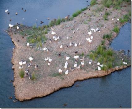 la-isla-de-los-patos2