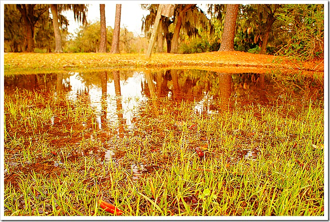 swamp-public-domain-pictures (4)