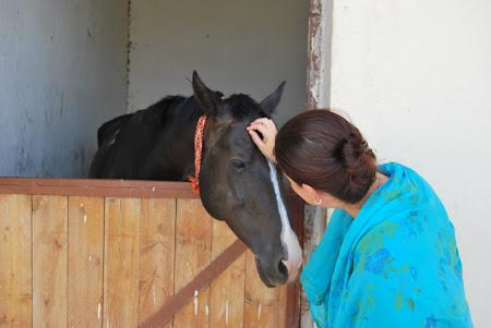 Cai Turkmenistan: Herghelia de cai