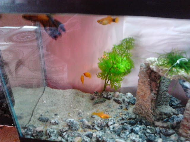 Filtro feito com Potinho de Ração para pequenos aquarios 2014-06-24%25252013.03.31