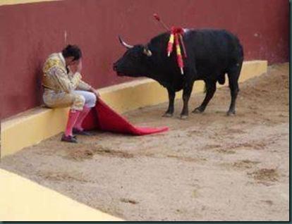pussy bull