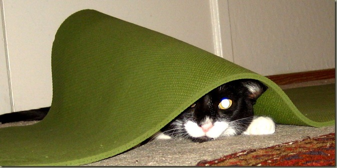 Fred Under Yoga mat 01a