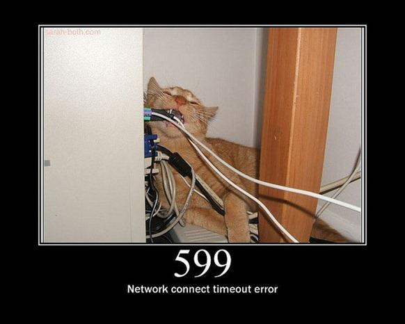 HTTP-Status-Cats-28