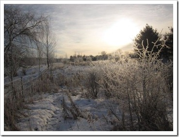 20120126_frost_010
