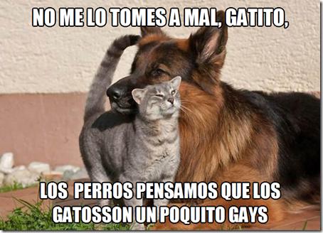 HUMOR PERROS CON GATOS (4)