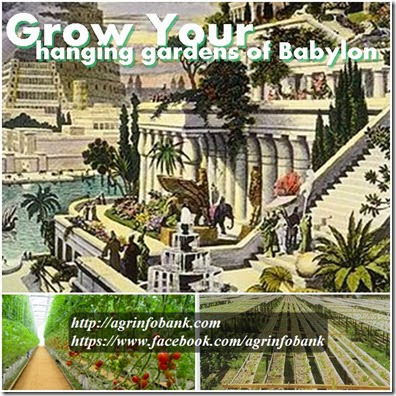 grow your hanging gardens of Babylon