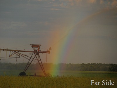 Rainbows on the fields