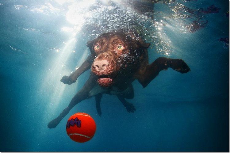 Underwater-Dogs-6