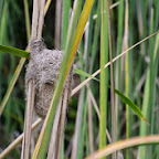 Webervogelnest am Lake Duluti © Foto: S.Schlesinger | Outback Africa Erlebnisreisen