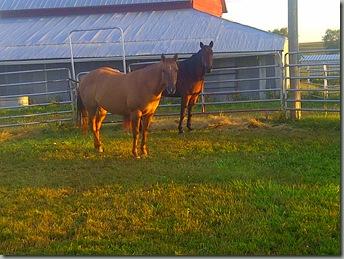 Elk-20110918-01263