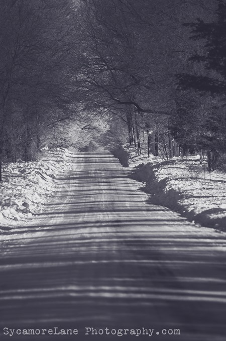 SycamoreLane Photography-Black and White road