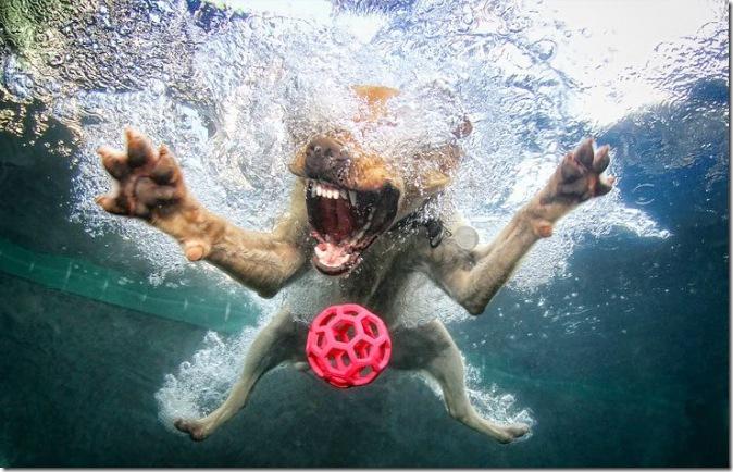 seth-casteel-underwater-dogs-5