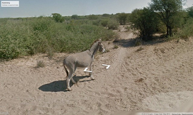 Google Shot the Street View car