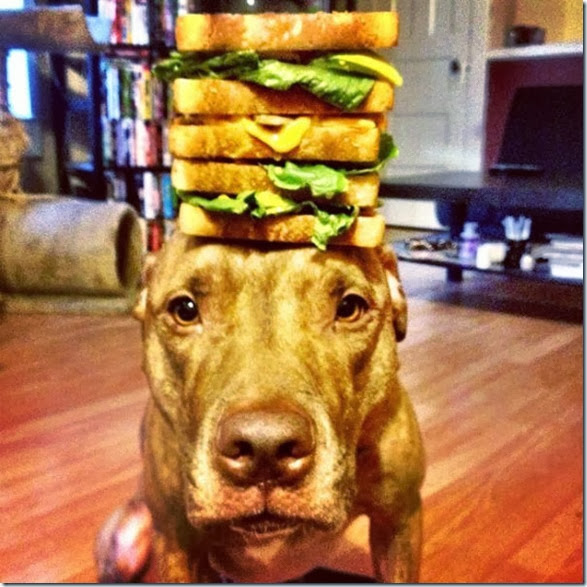 stacking-dogs-head-11