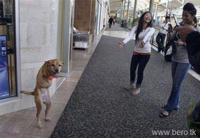 Cão chamado Faith FÉ3