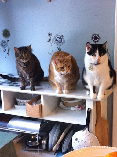 Minnow's feline siblings watch and wait for judges final score...