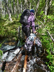 Carrying the bike across a stream on sketchy logs on the Argentinian side.