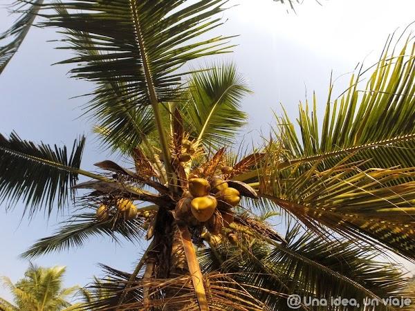 Kerala-backwaters-Kumarakom-4.jpg