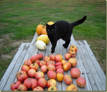 Baby& pumpkins