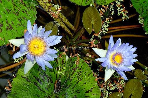Azul - Glória Ishizaka 61