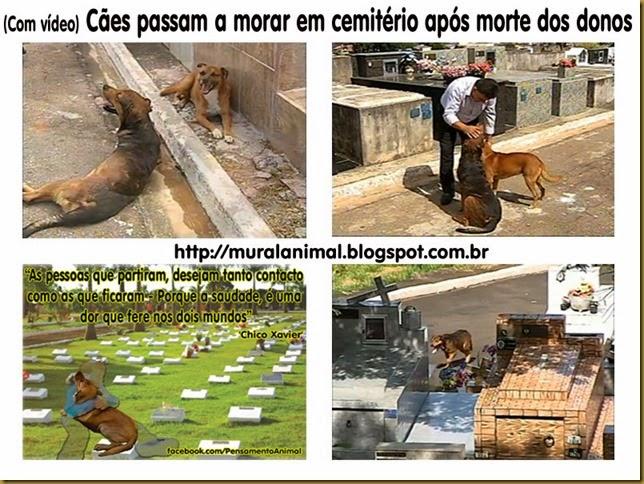 caes-cemiterio