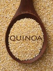 quinoa_thestudiomdr