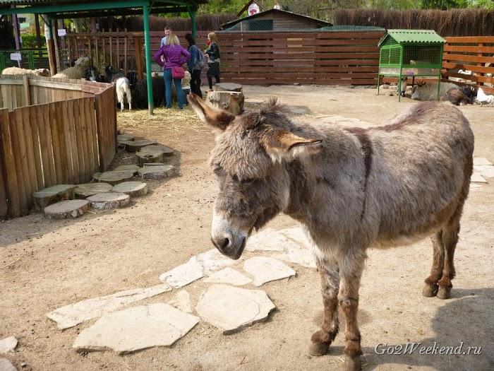 Kiev_Zoo_28.jpg