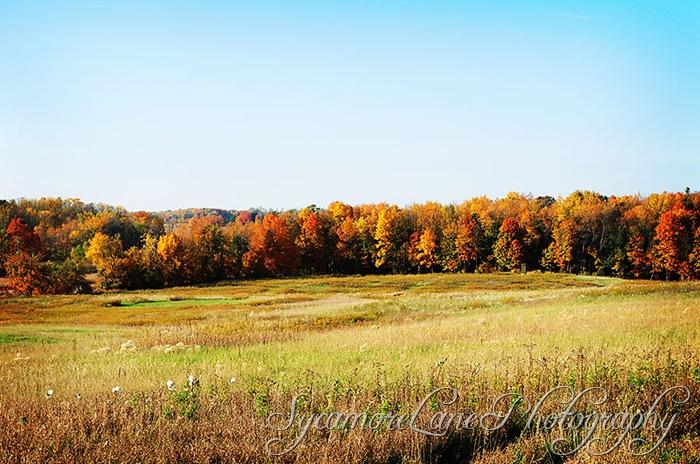 autumn-2-w