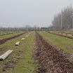 Compost op plantstroken GP2013_02.JPG