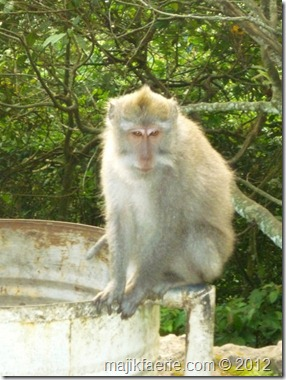 59 monkies (479x640)