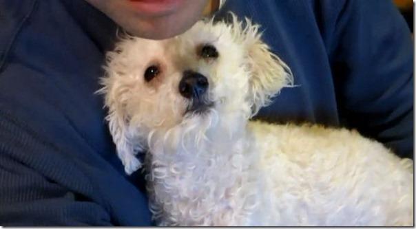 Cachorro cego abandonado encontrou uma nova familia (18)