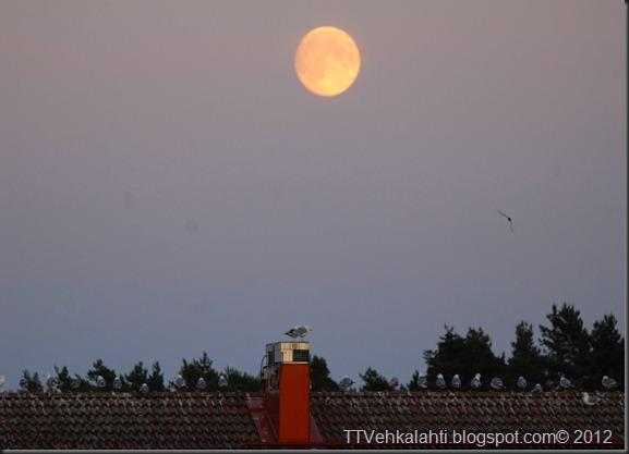 kuu lokit 001