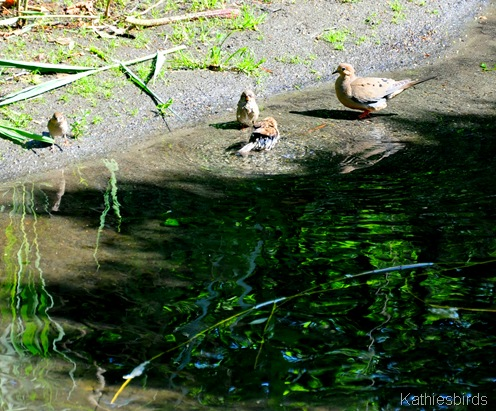 4. birds-DSC_0003