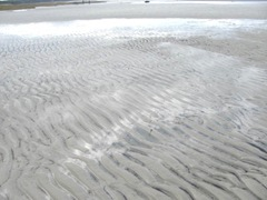 11.2011 skaket beach dennis low tide ripples in the sand2
