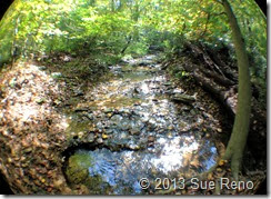 Sue Reno, Steinman Run Trail, view 2