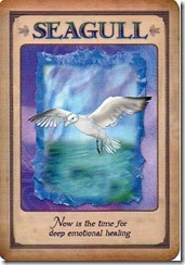 seagull001