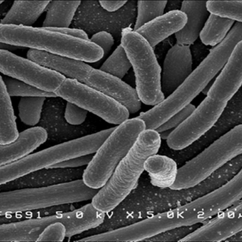 Celulas de biocombustible generan electricidad que sale del cuerpo