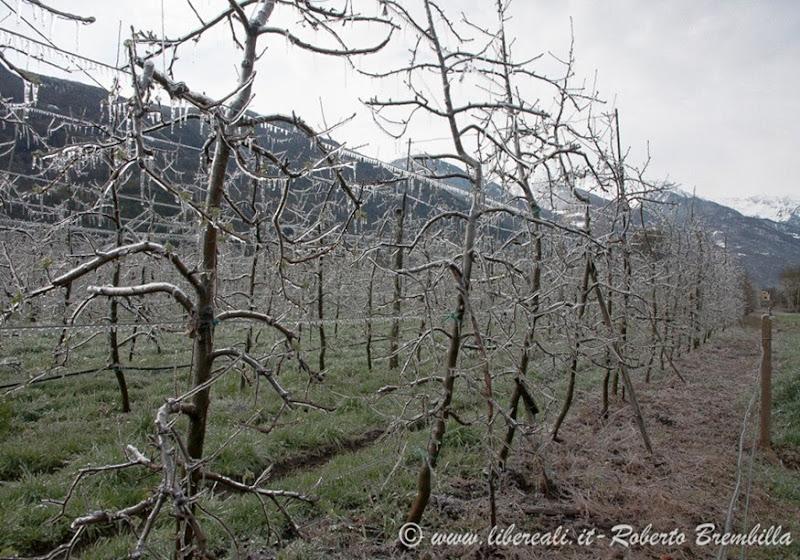 2014-03-3-25_Meleto ghiacciato_Villa di Tirano (1)