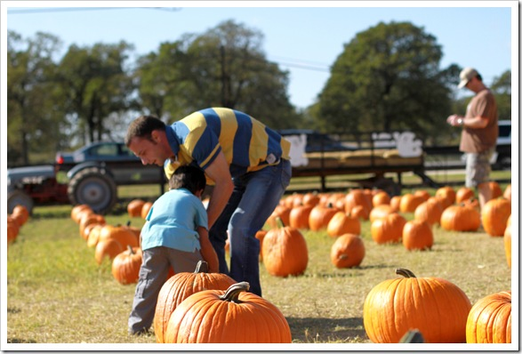 pumpkin patch IMG_9950