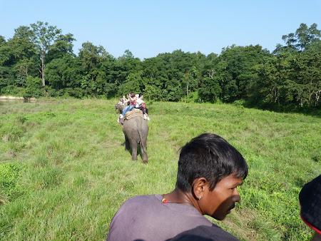 Safari elefanti Chitwan