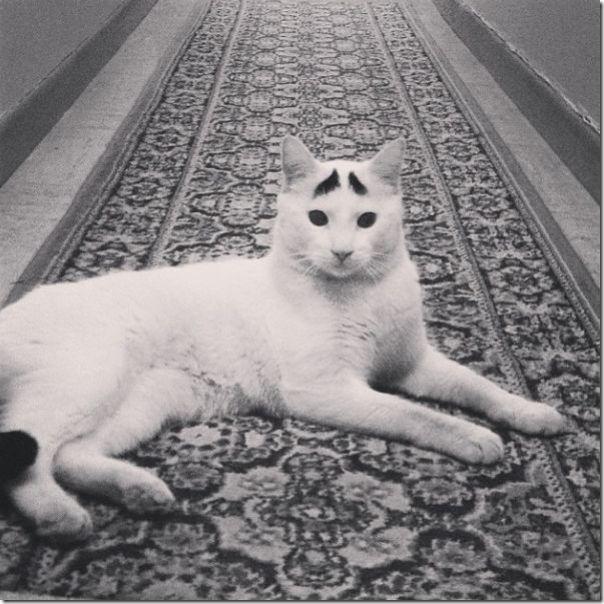 white-cat-eyebrows-10