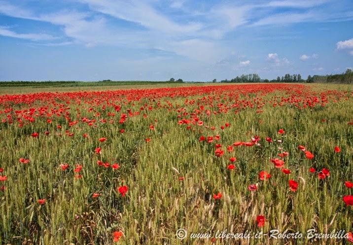 28-2014-05-21_bonifica del mezzano_Delta Po (20)-2