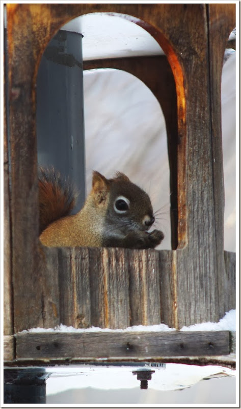 squirrel 2.14 017