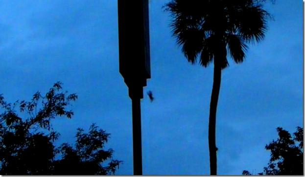 bat leaving 2