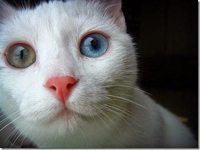 imagenes divertidas de gatos