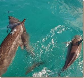 Golfinhos em Fernando de Noronha Autor Luiz Jr. Fernandes