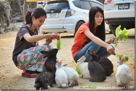 กระต่าย วัดพุทธบาทภูความเงิน เชียงคาน